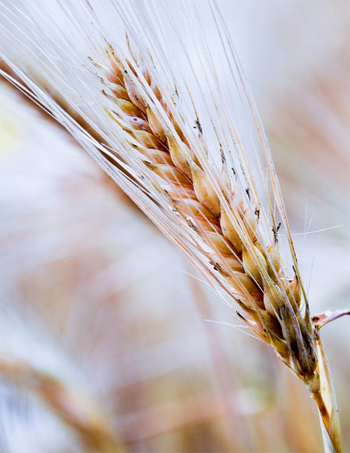Gluten Free Diet and Hair Loss